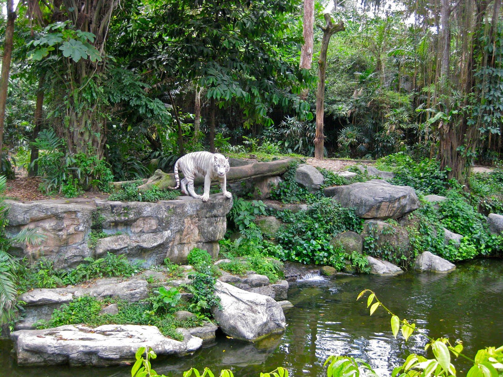 Tggerrss zoo