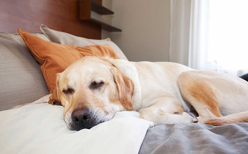 hotel-dog_2533521k[1]